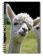 Stealing The Limelight Spiral Notebook