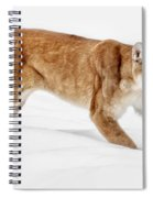Stealth In The Snow Spiral Notebook