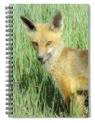 Steamboat Fox Spiral Notebook