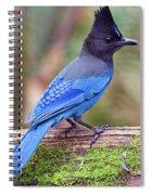 Steller's Jay IIi Spiral Notebook