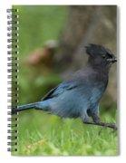 Steller's Jay Landing Spiral Notebook