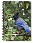 Steller's Jay Spiral Notebook
