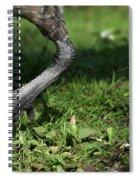 Steppin Out Spiral Notebook