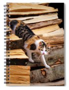 Stepping Down - Calico Cat On Beech Woodpile Spiral Notebook