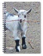 Sticky Business Spiral Notebook