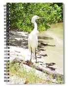 Still Looking For Lunch Gp Spiral Notebook