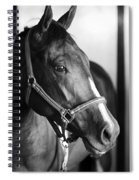 Horse And Stillness Spiral Notebook