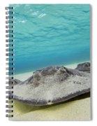 Stingrays Under Water Spiral Notebook