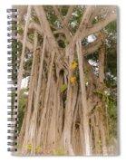 Strangler Fig Spiral Notebook