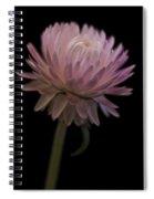 Straw Flower Spiral Notebook