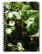 Strawberry Flower And Bee Spiral Notebook