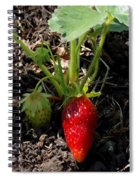 Strawberry Plant Spiral Notebook