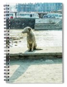 Stray By The River Signed First Edition Spiral Notebook