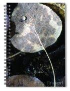 Stream Leaf Spiral Notebook