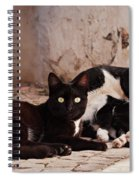 Street Cats - Portugal Spiral Notebook