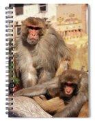 Kathmandu Street Monkeys  Spiral Notebook