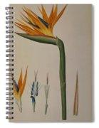 Strelitzia Reginae Spiral Notebook