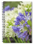 Striking Blue And White Agapanthus Flowers Spiral Notebook