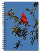 Striking Spiral Notebook