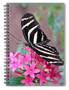 Striped Beauty - Butterfly Spiral Notebook