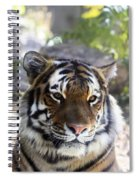 Striped Beauty Spiral Notebook
