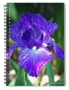 Striped Blue Iris Spiral Notebook