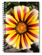 Striped Daisy Square Spiral Notebook