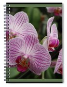 Striped Orchids With Border Spiral Notebook