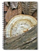 Striped Shelf Fungus - Basidiomycota Spiral Notebook