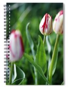 Striped Tulips In Spring Spiral Notebook