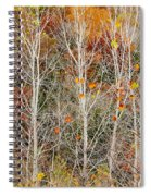 Stripped Bare To The Bark Spiral Notebook