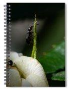 Strive Hard  Spiral Notebook