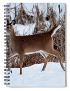 Strolling Along Spiral Notebook