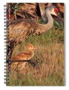 Strolling Sandhill Crane Family Spiral Notebook