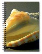 Strombus Inermis Seashell Spiral Notebook