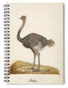 Struisvogel, Anonymous, 1560 - 1585 Spiral Notebook