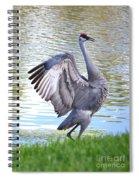 Strutting Sandhill Crane Spiral Notebook