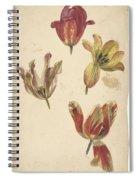 Studies Of Four Tulips, Elias Van Nijmegen, C. 1700 - C. 1725 Spiral Notebook