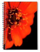 Study In Red Spiral Notebook