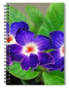 Stunning Blue Flowers Spiral Notebook
