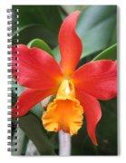 Stunning Cattleya Spiral Notebook