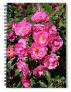 Stunning Pink Roses Spiral Notebook