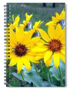 Stunning Wild Sunflowers Spiral Notebook