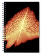 Sturgeon Scales, X-ray Spiral Notebook