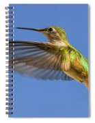 Stylized Hummingbird In Hover Spiral Notebook