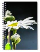 Subtle Beauty Spiral Notebook