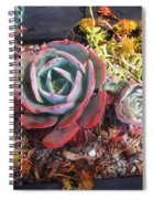 Succulent Plants. Multi-colored Spiral Notebook