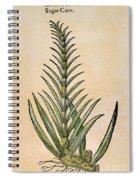 Sugar Cane, 1597 Spiral Notebook