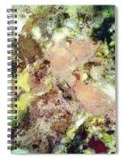 Sugar Coated Spiral Notebook