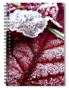 Sugar Coated Morning Spiral Notebook